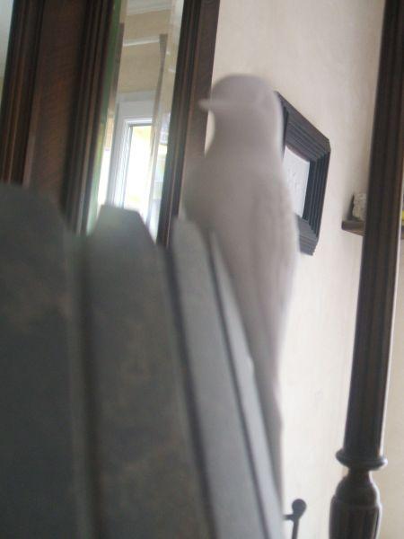 oiseaux003.jpg